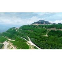 矿山生态环境治理及垦造工程监理单位网上比选