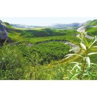 华新水泥(昆明东川)有限公司2021年4月矿山植被恢复养护